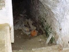 Acceso al sótano (PE)
